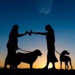 Sesión con Mascotas | Torreblanca